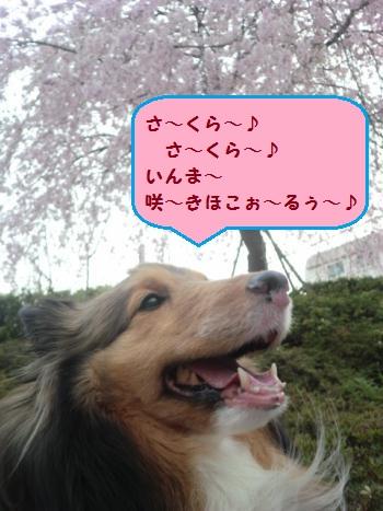 CIMG3229.jpg
