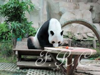 チェンマイ動物園 プーケットタイランド観光ツアー