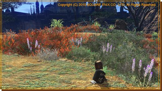No.07 砂漠の植物