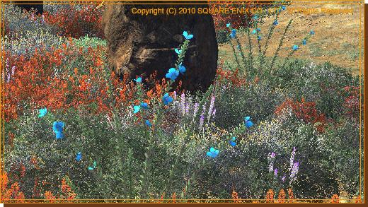No.09 砂漠に咲く青い花