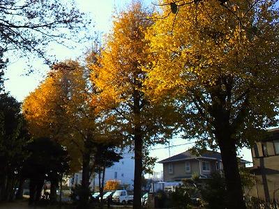 朝日を浴びた樹