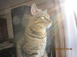 2011.10.16-rambo