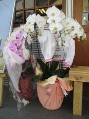 【新店】らぁめん 泰然-2