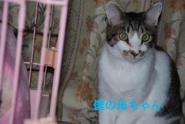 DSC_0569_20111113090353.jpg