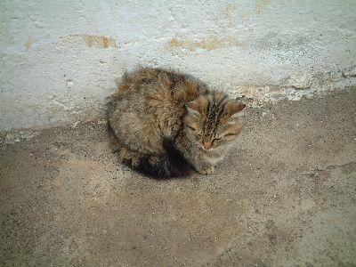 tkcat3