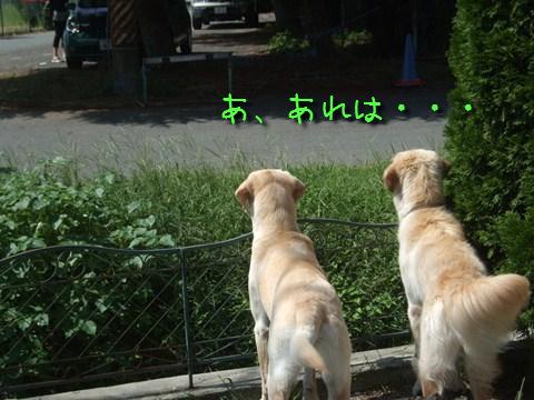 DSCF0002_20110913153222.jpg