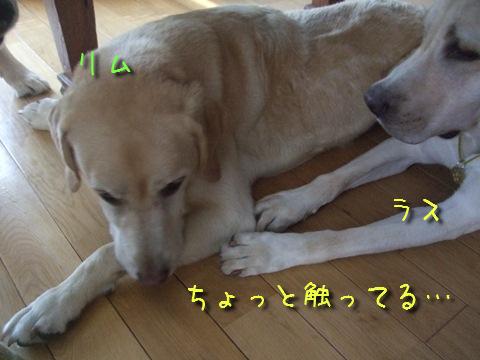 DSCF0031_20110913154713.jpg