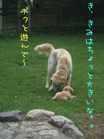 DSCF0040_20110919133447.jpg