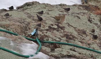 早朝の小鳥達