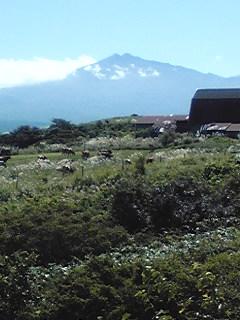 鳥海山と牛さん