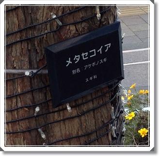 杉並公会堂の前の木
