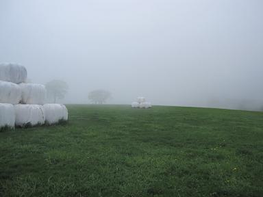 牧草地も霧でモクモク。