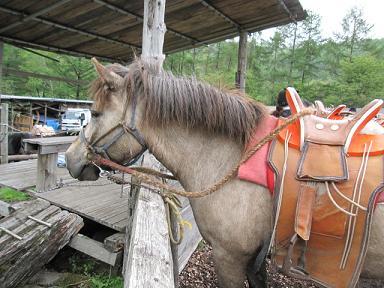 これがモンゴル鞍・・・立った状態で乗るのがモンゴルスタイルなのでこの形なのです。