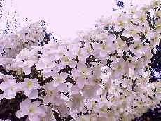 PA0_0003_20100614194955.jpg