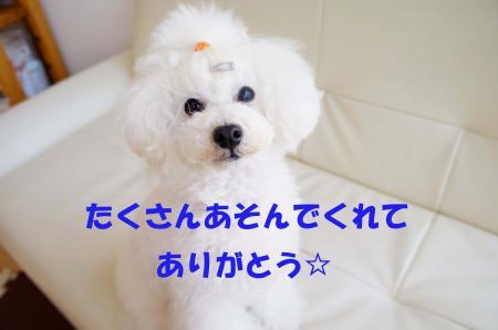 DSC05878縺ョ繧ウ繝斐・_convert_20131231204751