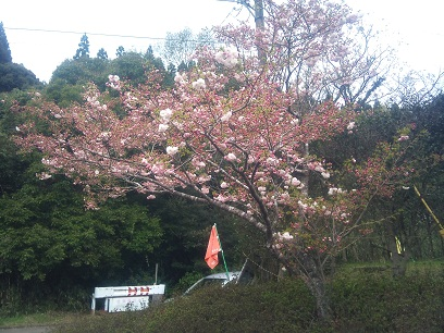 2012-04-152013_06_08.jpg