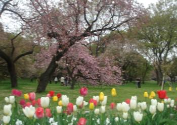 たてもの園桜