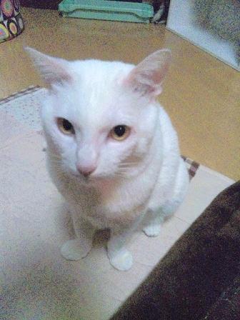 猫2010.03.12 004