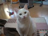 2010-03-14 ねこ 005