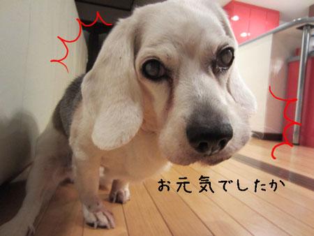 1_20120501155525.jpg