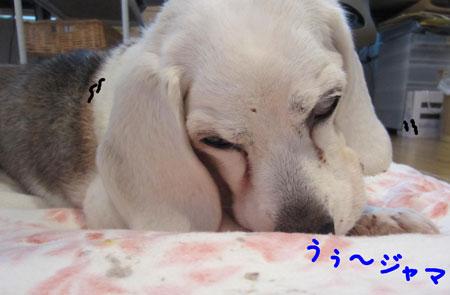 30_20120325180108.jpg
