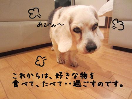 3_20120501155524.jpg