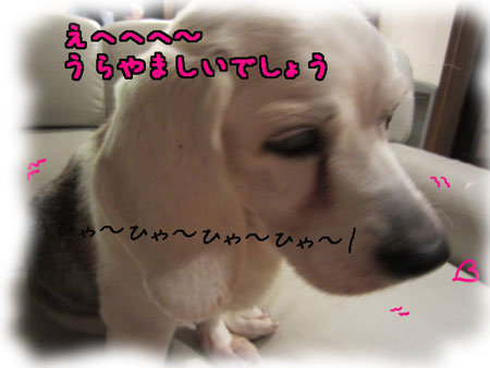 4_20120501155523.jpg