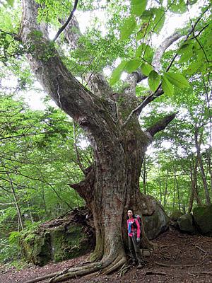 男池のでっかい木