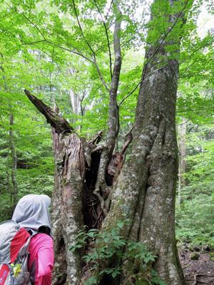 木のなかの木