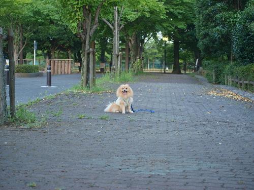 公園だよ!