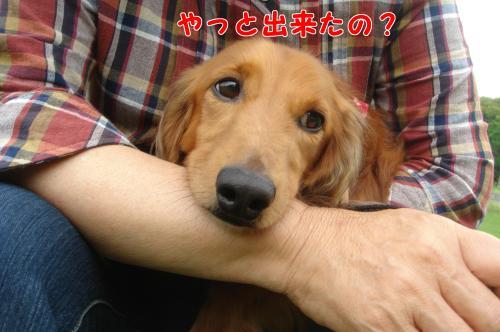DSC06145繧ゅ§_convert_20100715100643