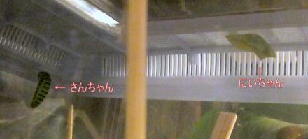 001_20110918055918.jpg