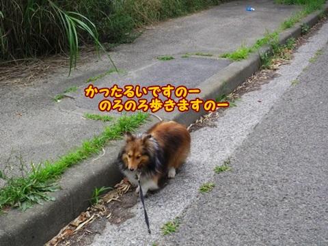 20130703IMGP6812.jpg
