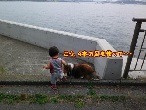 20130714IMGP6978.jpg