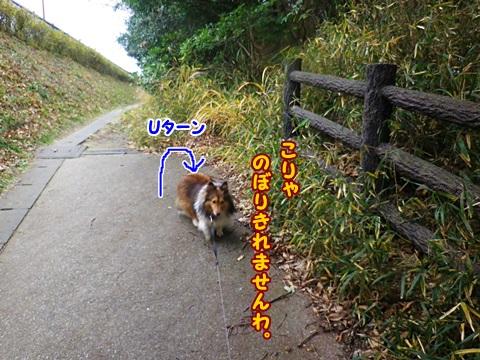 IMGP0551.jpg
