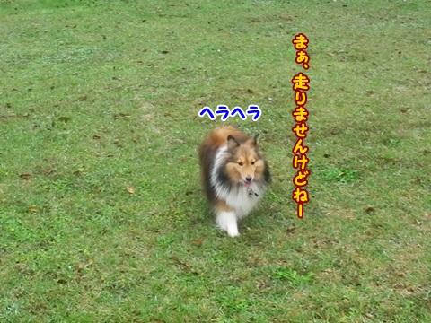 IMGP8488.jpg