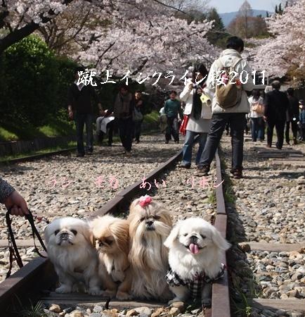 230409桜 B
