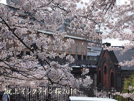 230409桜 TT