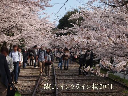230409桜
