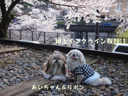 230409桜 C