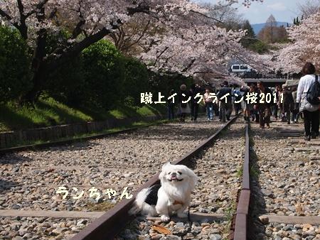 230409桜 A
