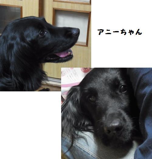 2012_0101_190659-RIMG0017_convert_20120104224727.jpg