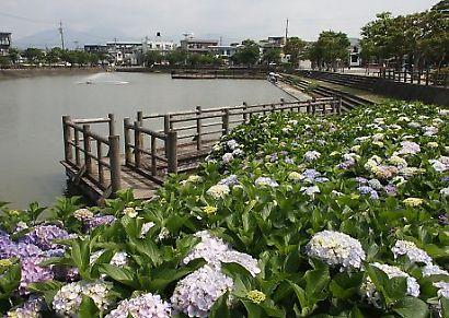 小鹿公園紫陽花-3