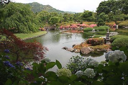 城北公園紫陽花-1
