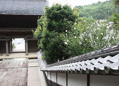 臨斉寺花-3
