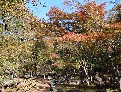 梅ケ島紅葉赤水の滝-1