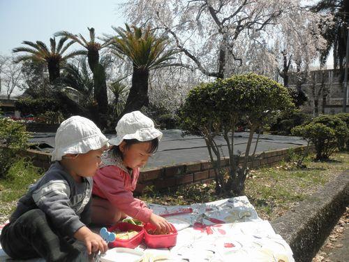 2011.3.30 sakura gohan