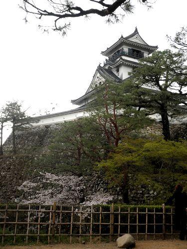 2011.4.3 koutijyo- sakura