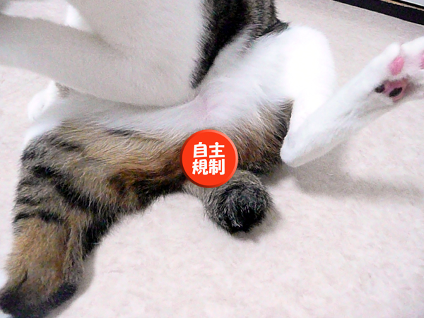 110611_rikimaru1.jpg