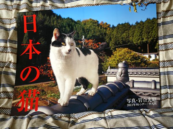 120113_nihonnnoneko.jpg